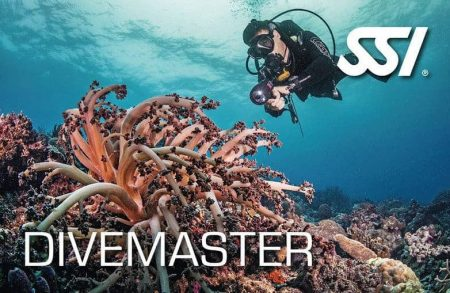 Divemaster ssi course plancton diving catalunya spain