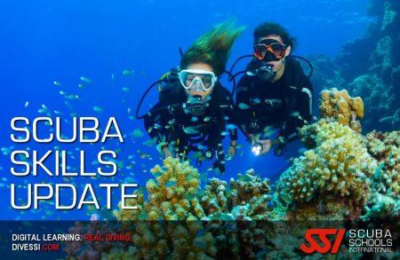 scuba skills update plancton diving ssi course
